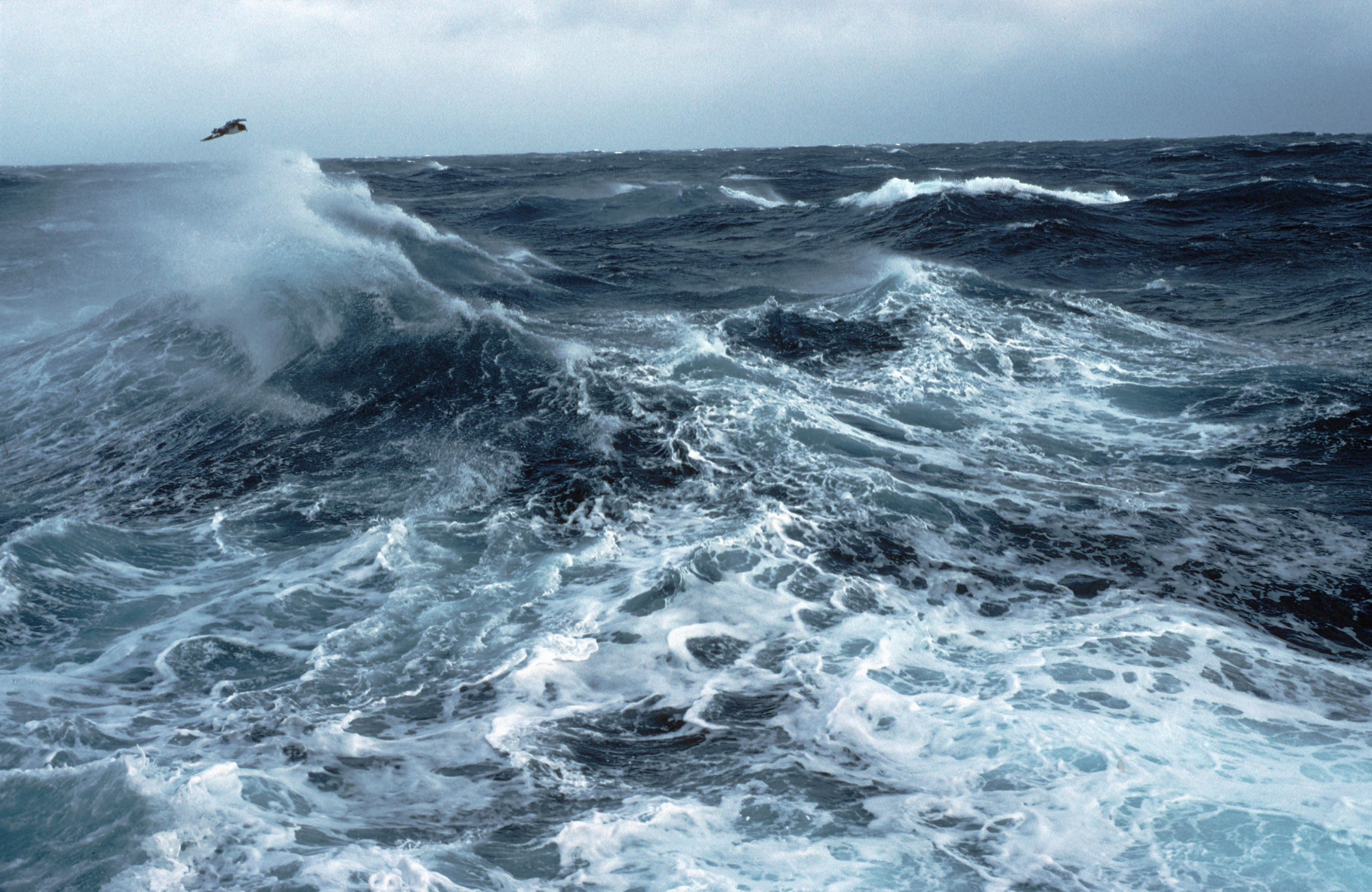 discovery of how carbon is stored in the Southern Ocean