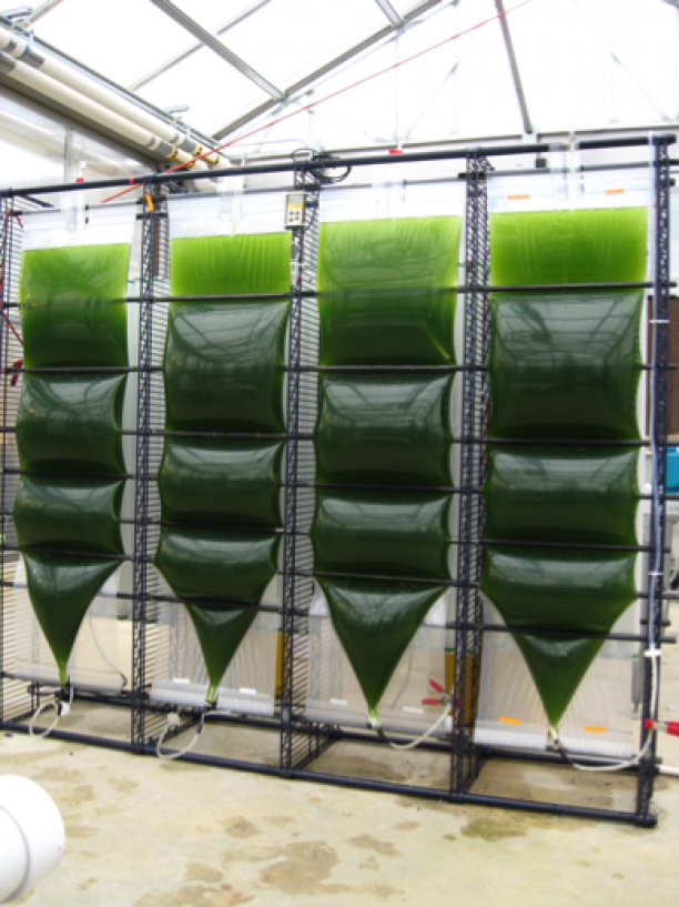 Biofuel expert explains how future innovations could help ...
