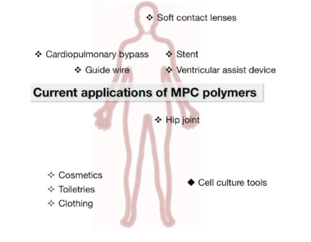 Biopolymer: Designer interfaces between biological and artificial ...