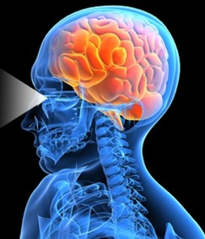 Brain Discovery Sheds Light On Link Between Vision And Emotion