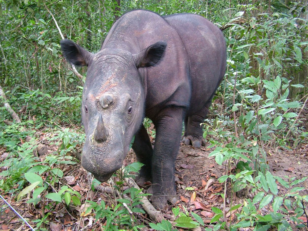 100 most threatened species are they priceless or worthless