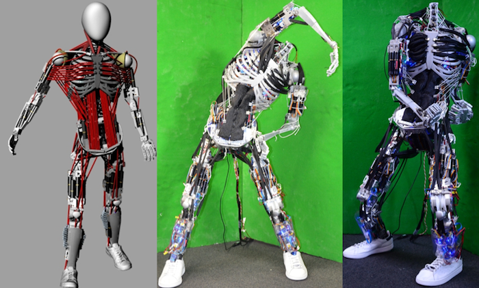 japanese researchers build robot with most humanlike muscle, Skeleton