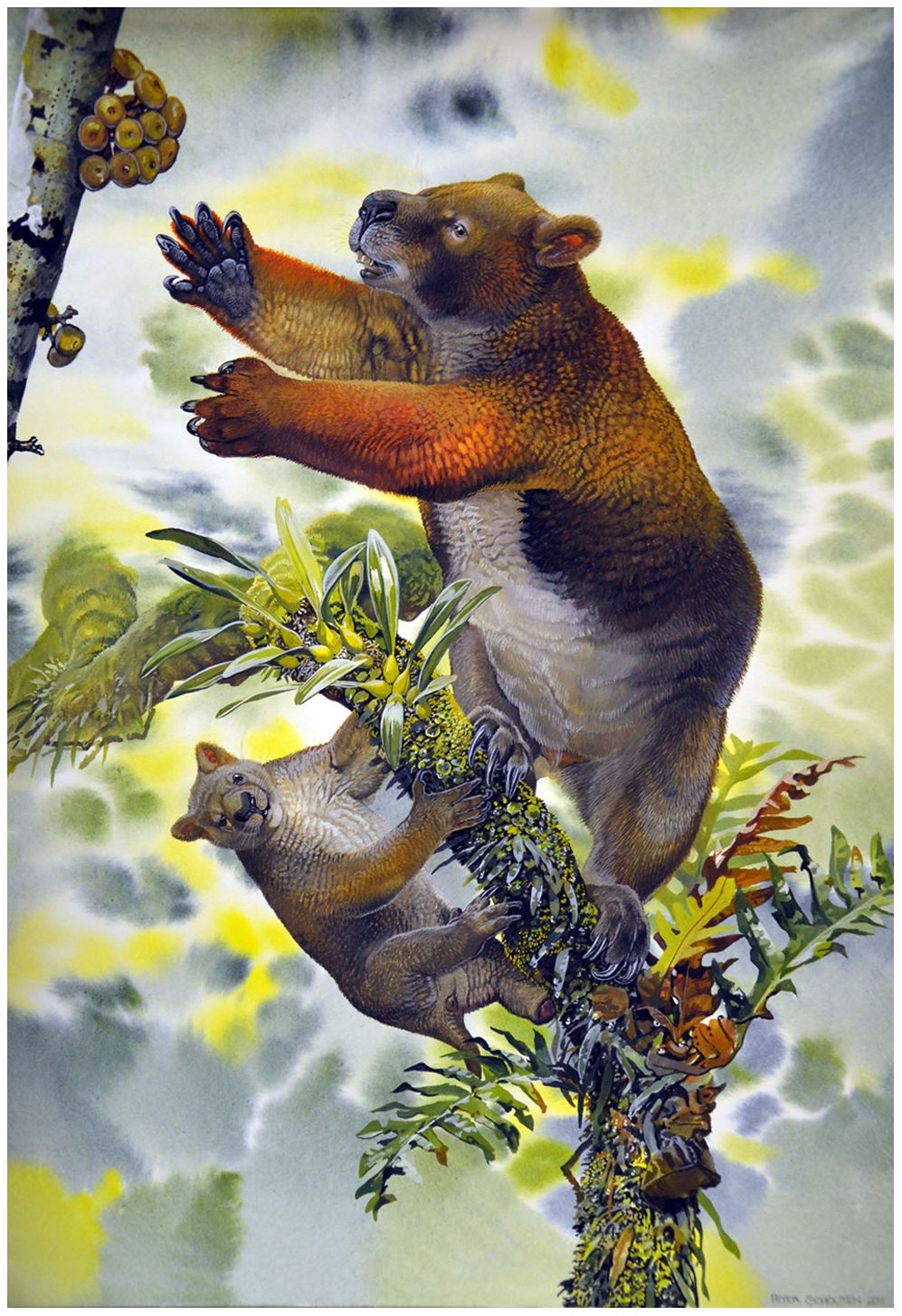 new research suggests massive marsupials lived in treetops