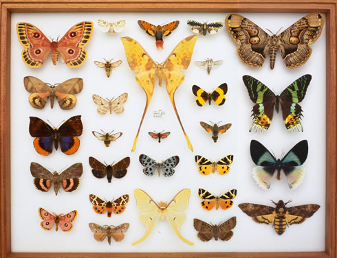 Mission To Map 10 Million Species In 50 Years