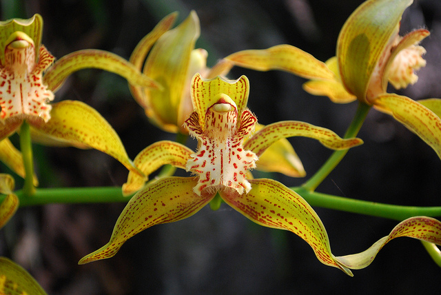 endangered wild orchids from a manmade flood, Beautiful flower