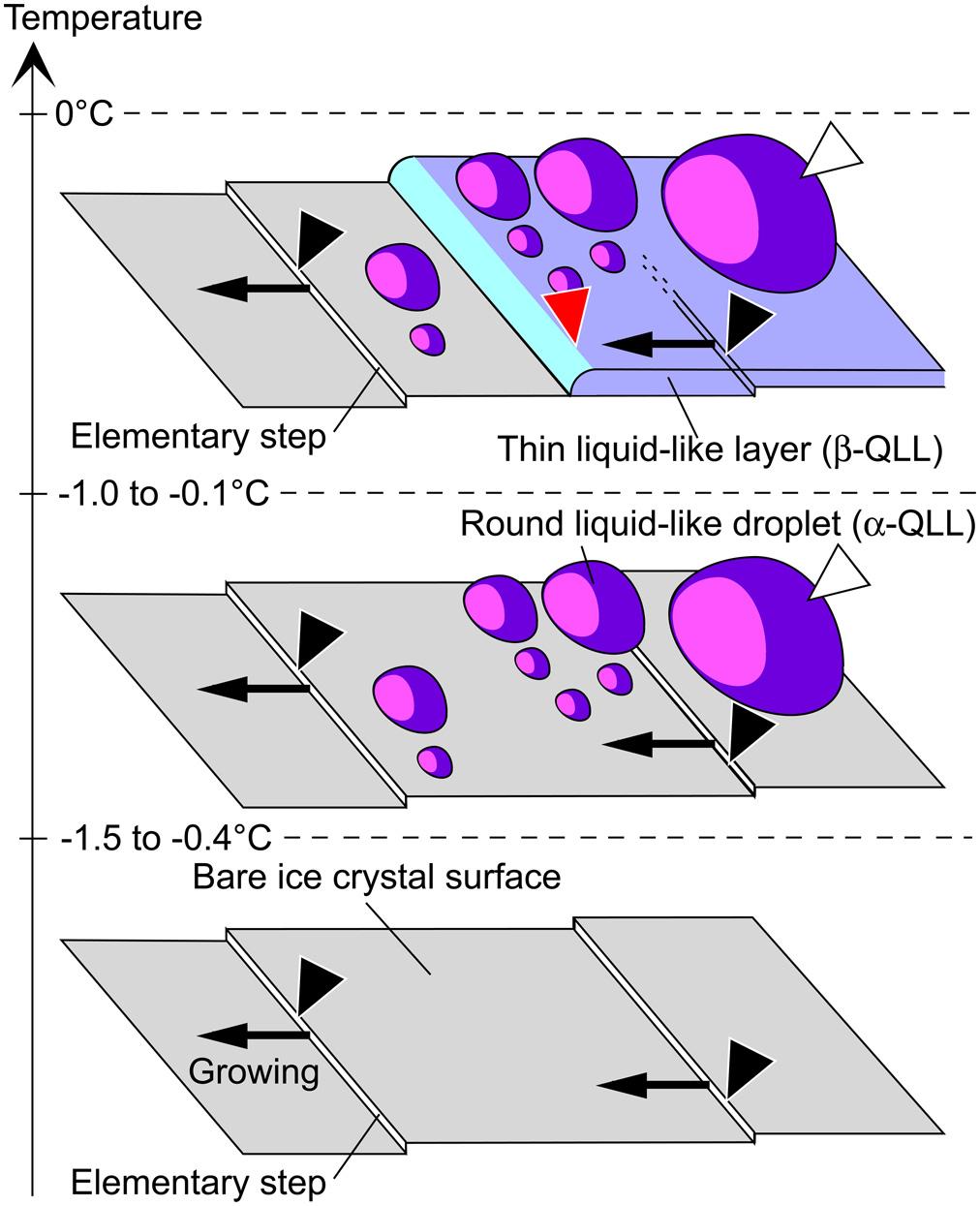 hidden nanoworld of ice crystals: Revealing the dynamic behavior of ...
