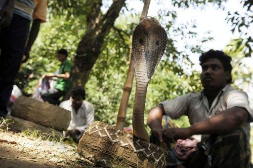 Image result for snakes for snake charmer pic