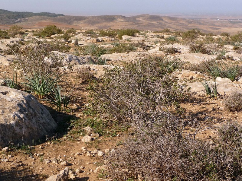 Some plants in arid regions benefit from climate change ...