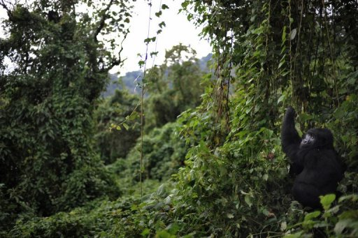 Central african countries to monitor congo forests sciox Image collections