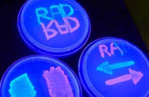 Totally rad: Scientists create rewritable digital data storage in DNA