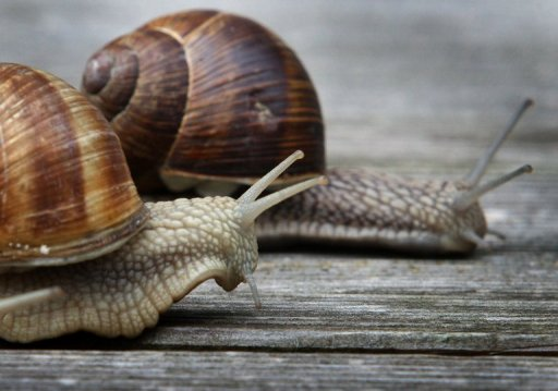 from the mouths of molluscs ancient snail relative found