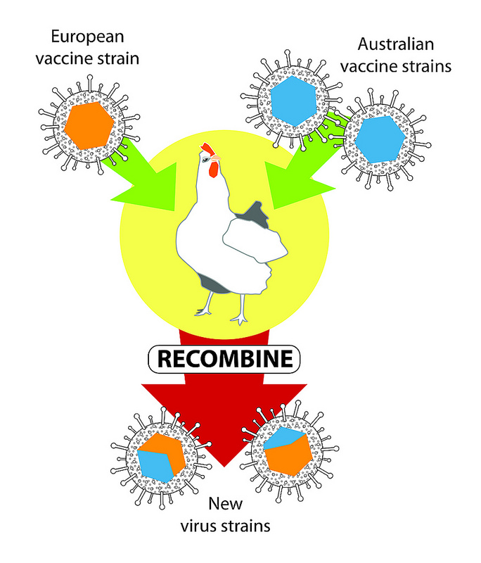 Viral Nano News Viralnanonews: Veterinary Vaccines Found To Combine Into New Viruses
