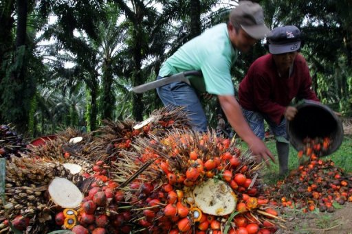 Palm Oil For India Destroying Indonesian Forests-5140