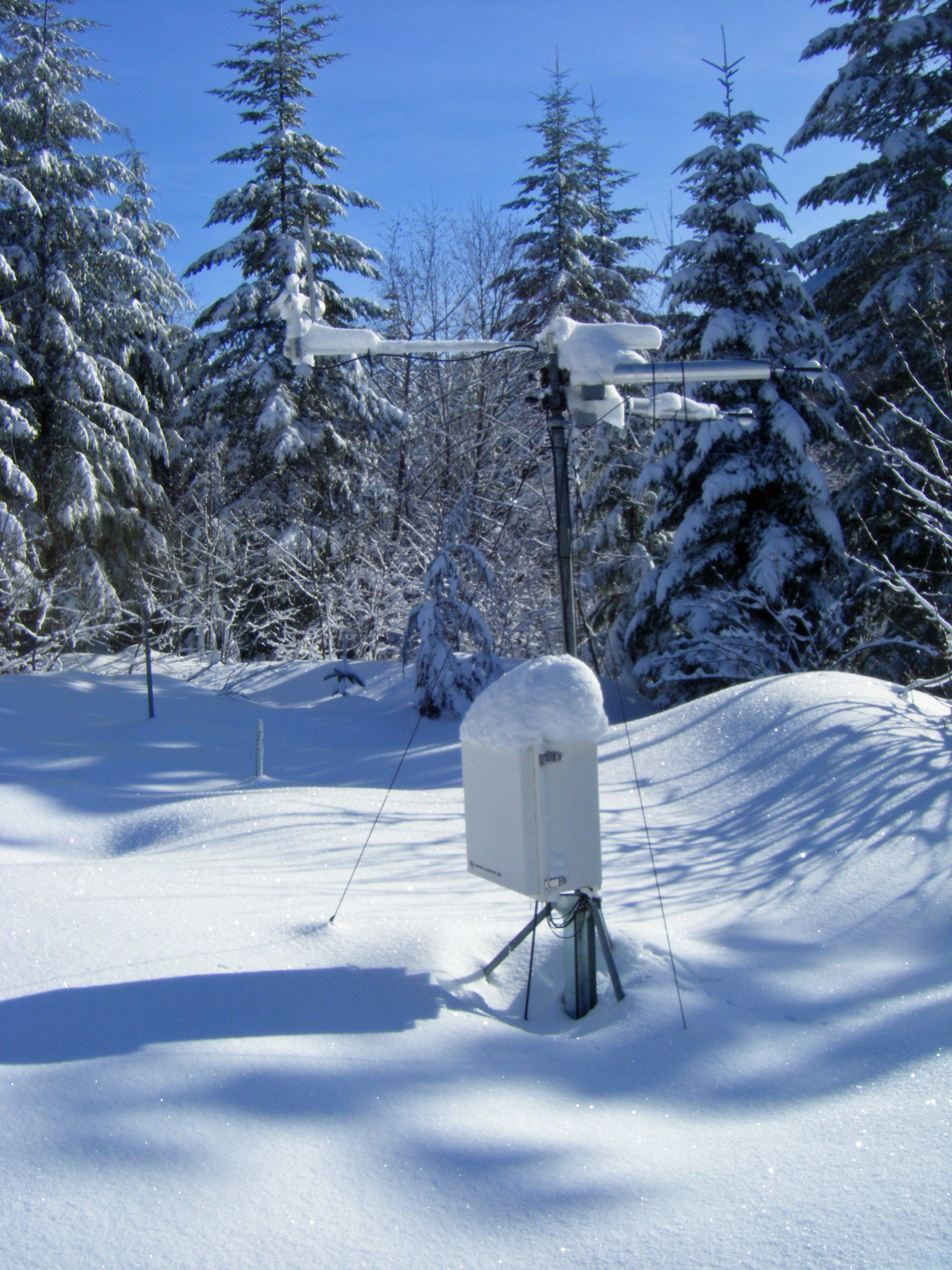 Snow melts faster under trees than in open areas in mild ...