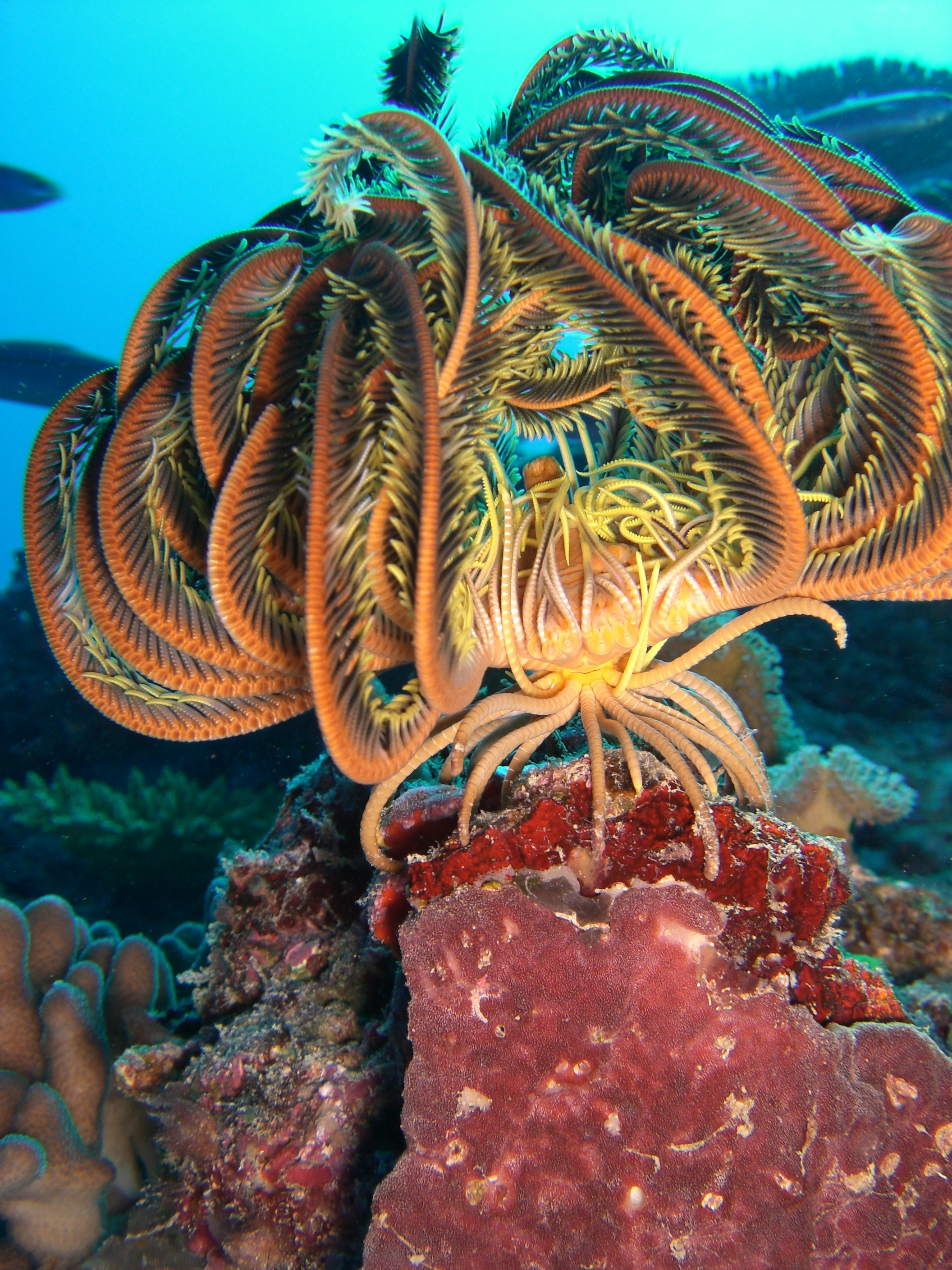 chemical ecologists translate the language of the sea