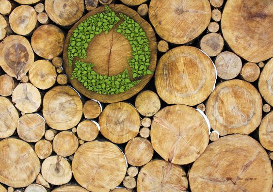 Transportation fuels from woody biomass promising way to