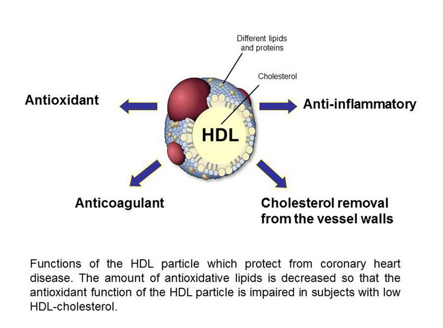 New study: Has HDL, the 'good' cholesterol, been hyped ...