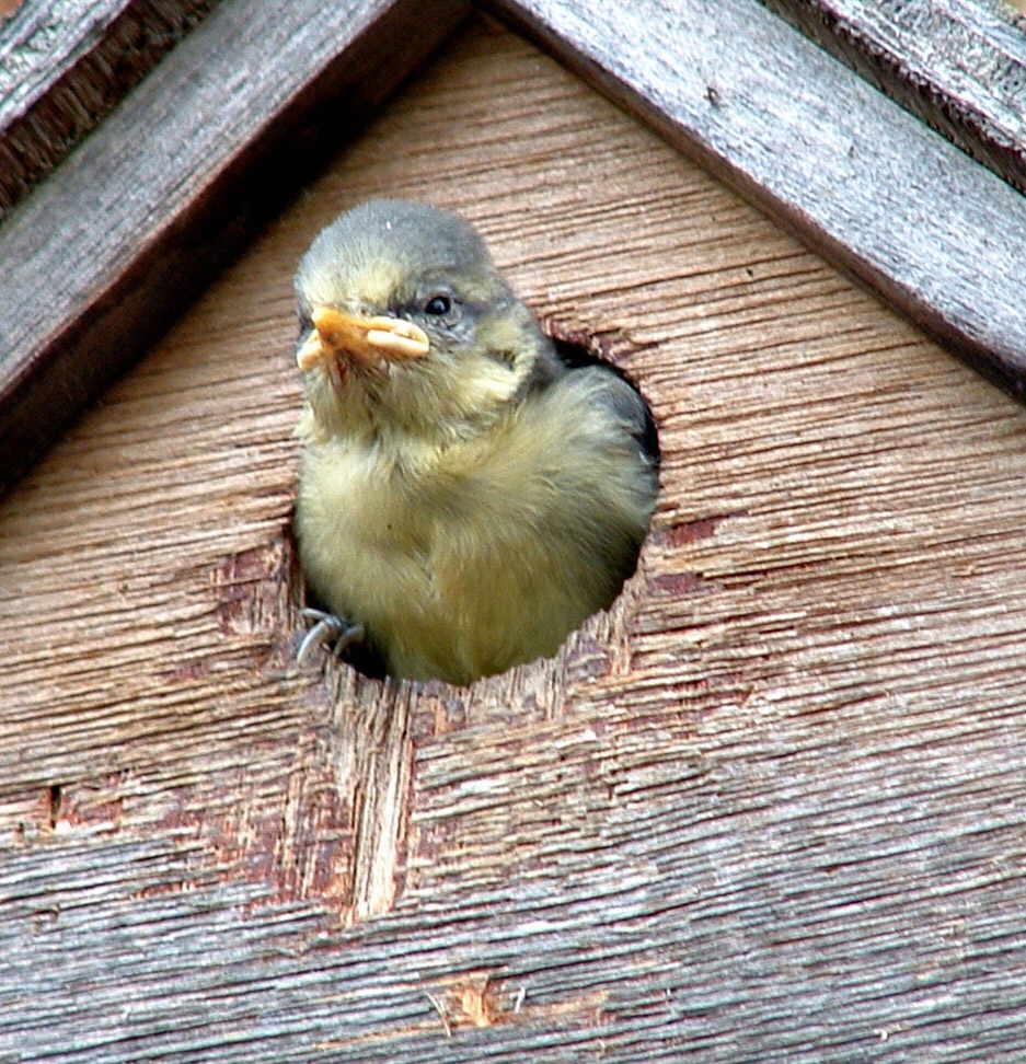 how to help garden birds in winter attracting birds in winter