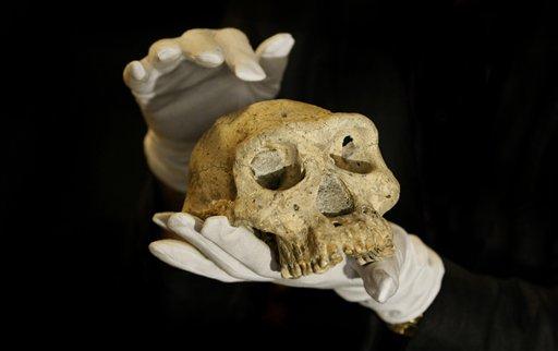 early man species