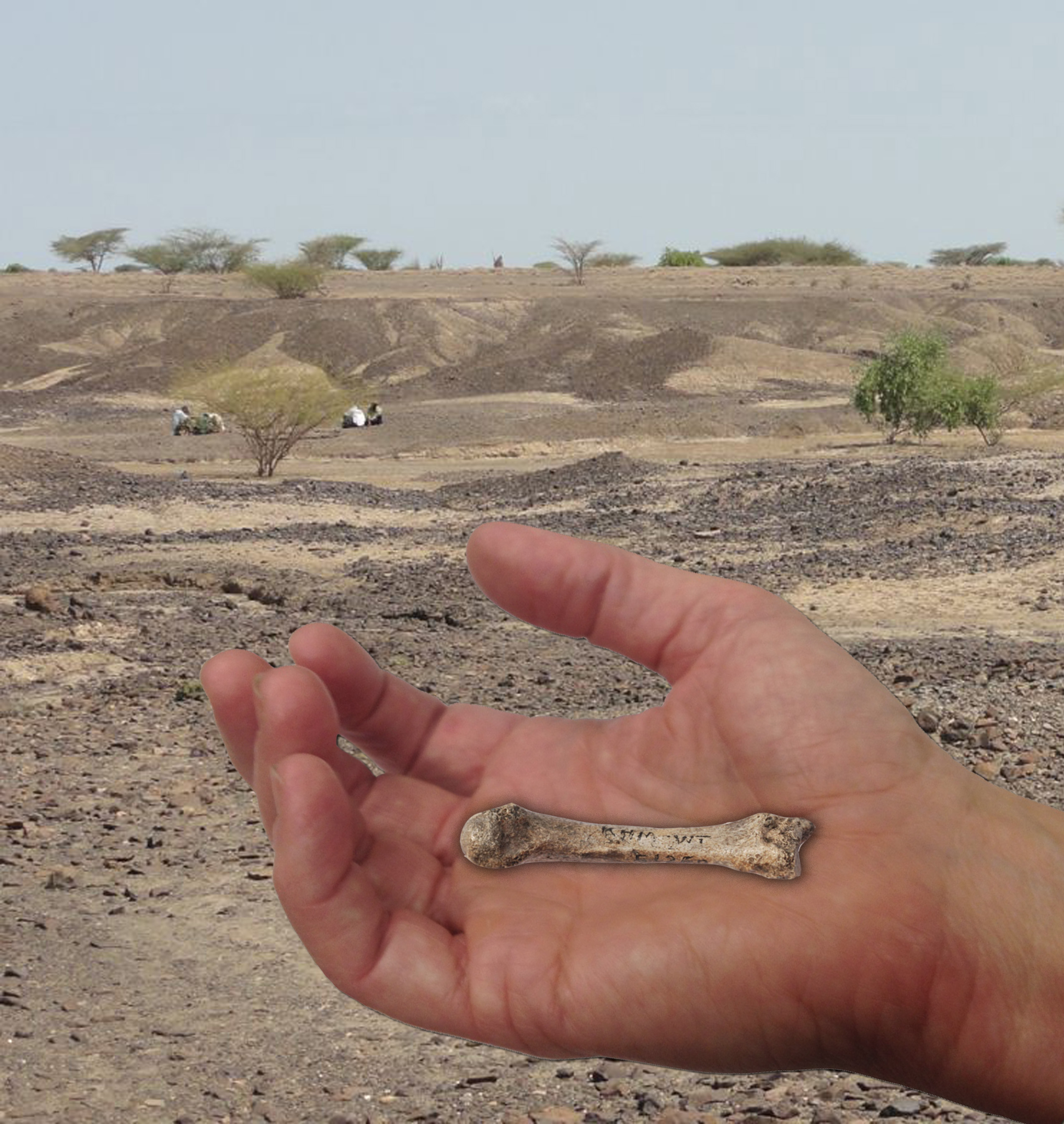 Discovery of 1.4 million-year-old fossil human hand bone closes ...