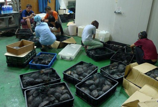 taiwan seizes 2 500 rare turtles bound for china
