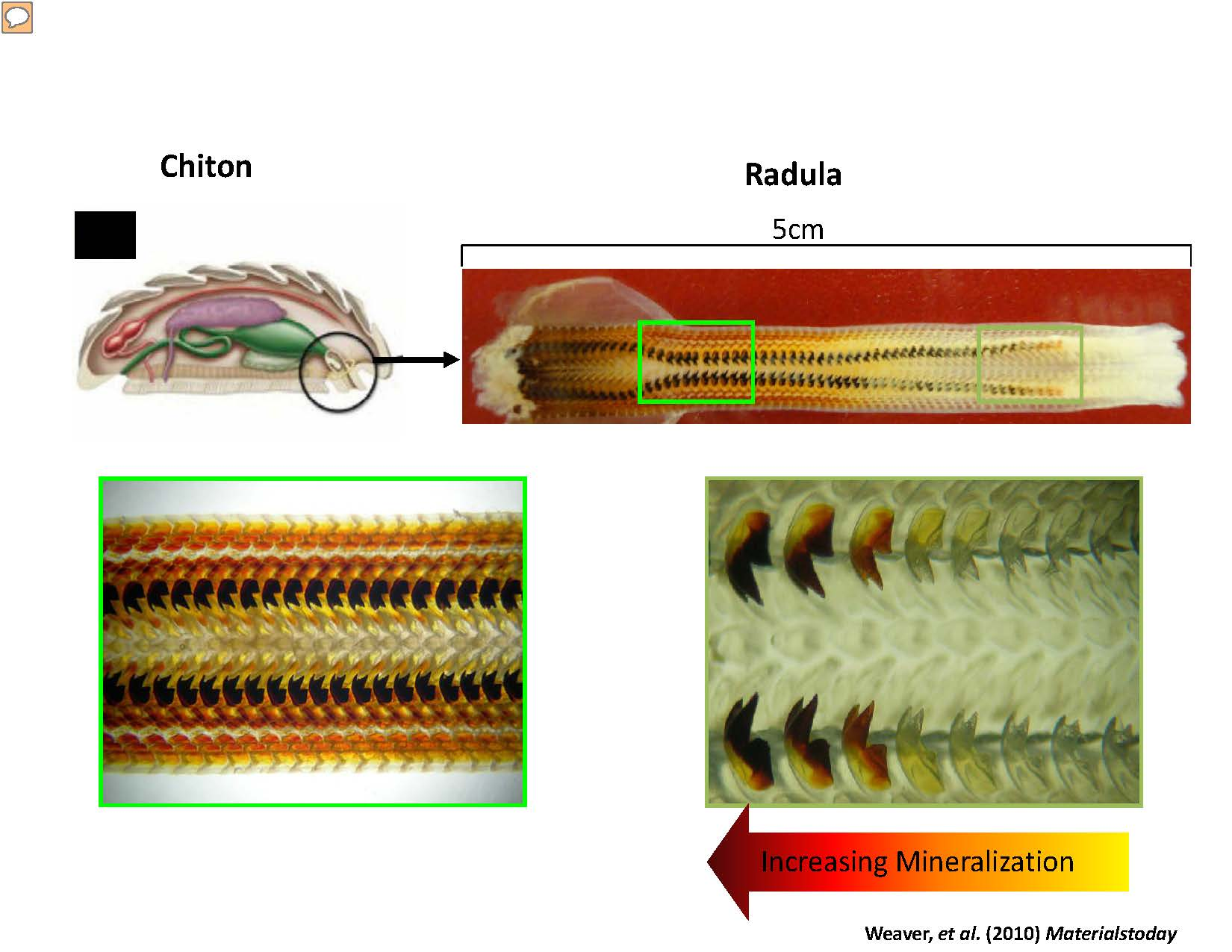 use snail teeth to improve solar cells and batteries