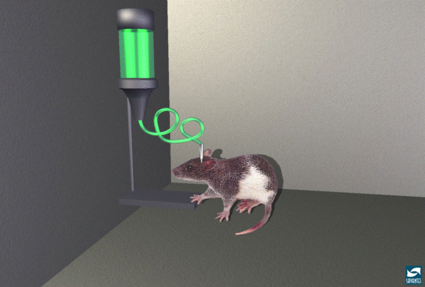 Deep brain stimulation a fix when the drugs dont work diagram of a rat self administering morphine credit wikimedia commons ccuart