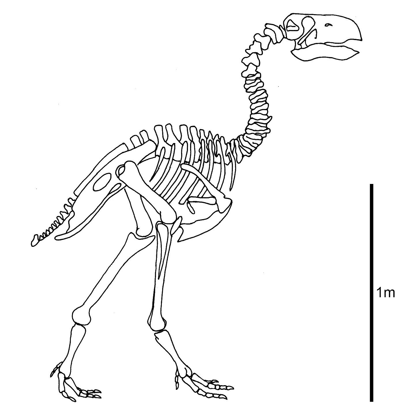 suggests terror bird u0027s beak was worse than its bite