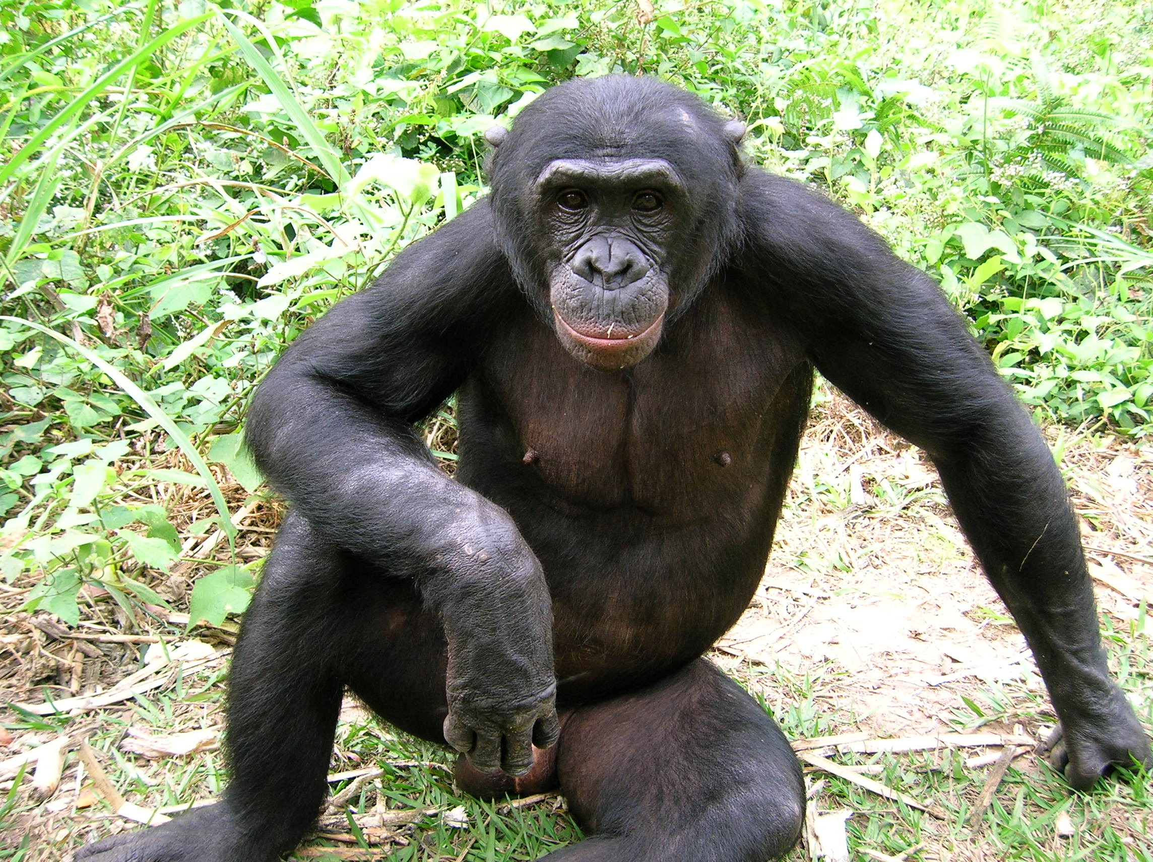 finds the forgotten ape threatened by human activity and forest loss