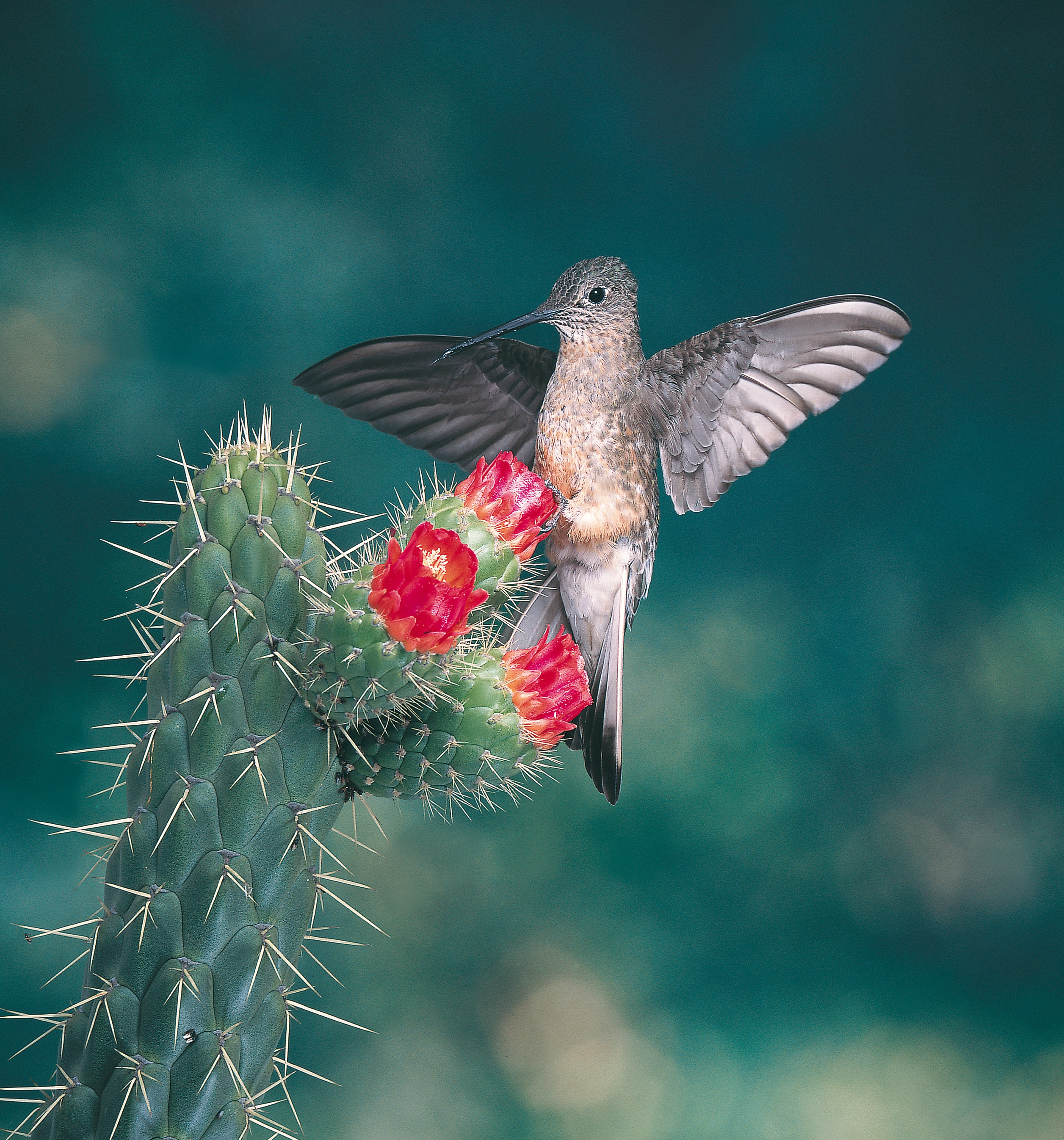 25 Crazy Facts About Hummingbirds - The Spruce