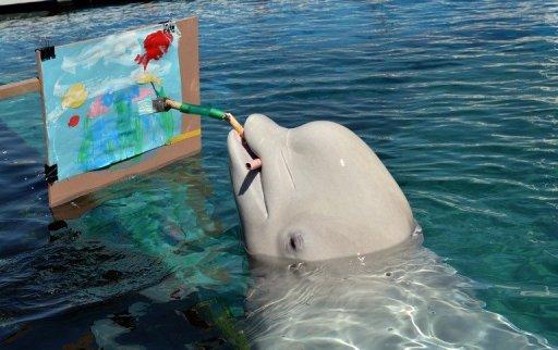 Beluga whales create art in Japan aquarium