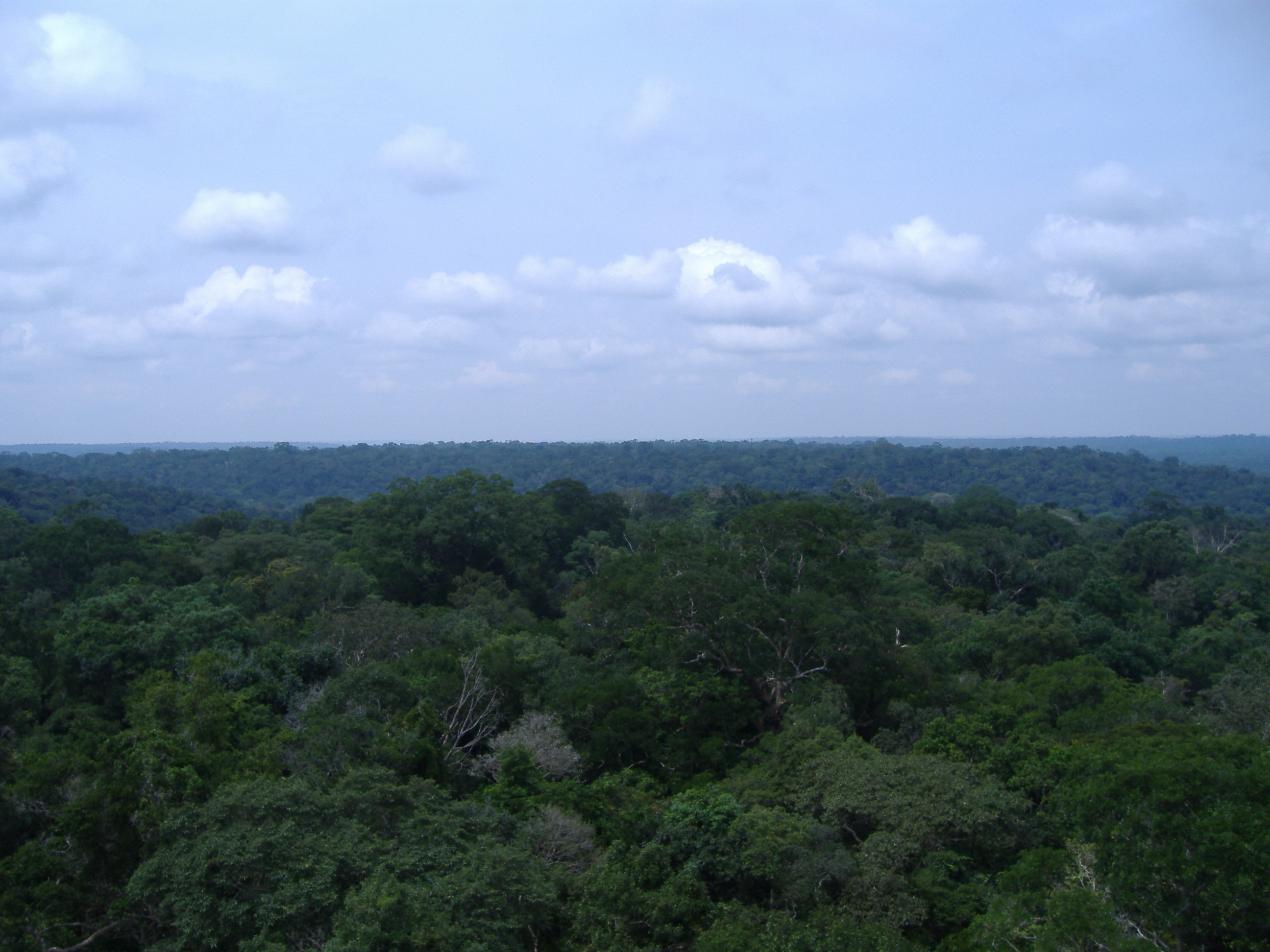 Amazon Rainforest More Able To Withstand Drought Than