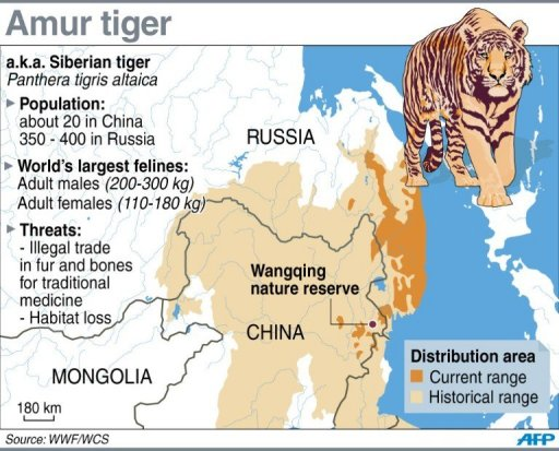 doomed deer freed to feed china 39 s elusive tigers. Black Bedroom Furniture Sets. Home Design Ideas