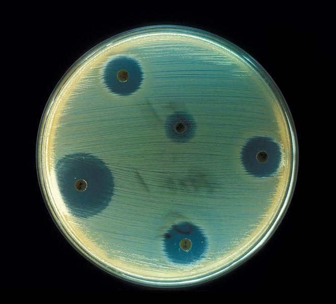 Octapeptin: 'Forgotten' antibiotic offers hope against worst superbugs