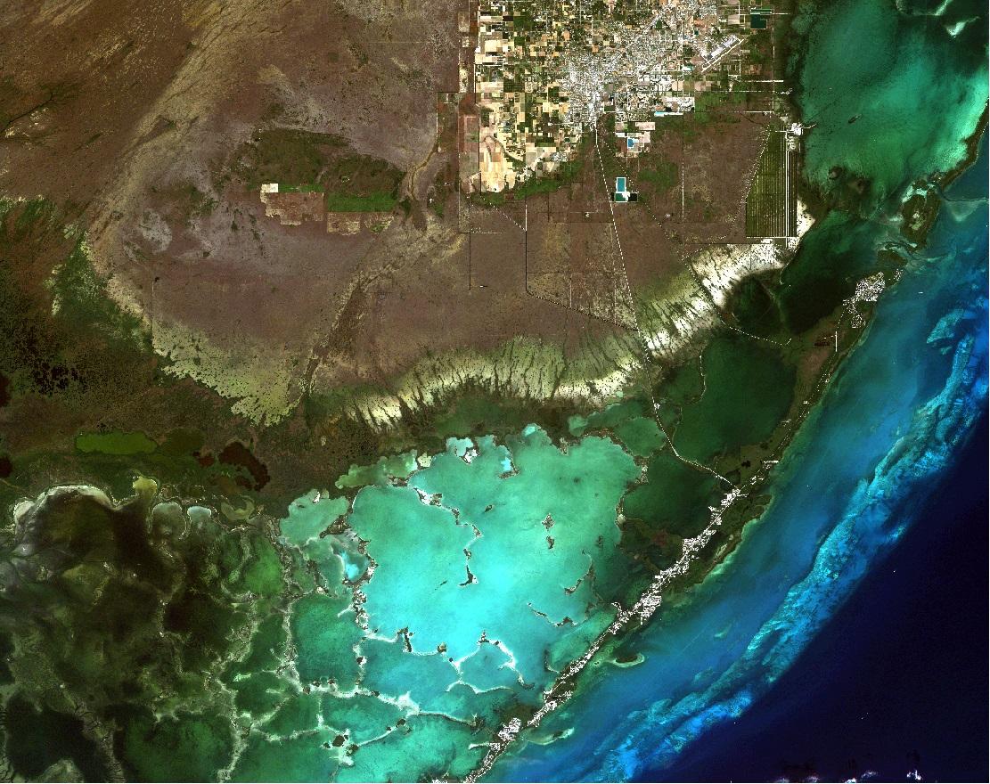 Line X Near Me >> As sea level rises, Everglades' freshwater plants perish