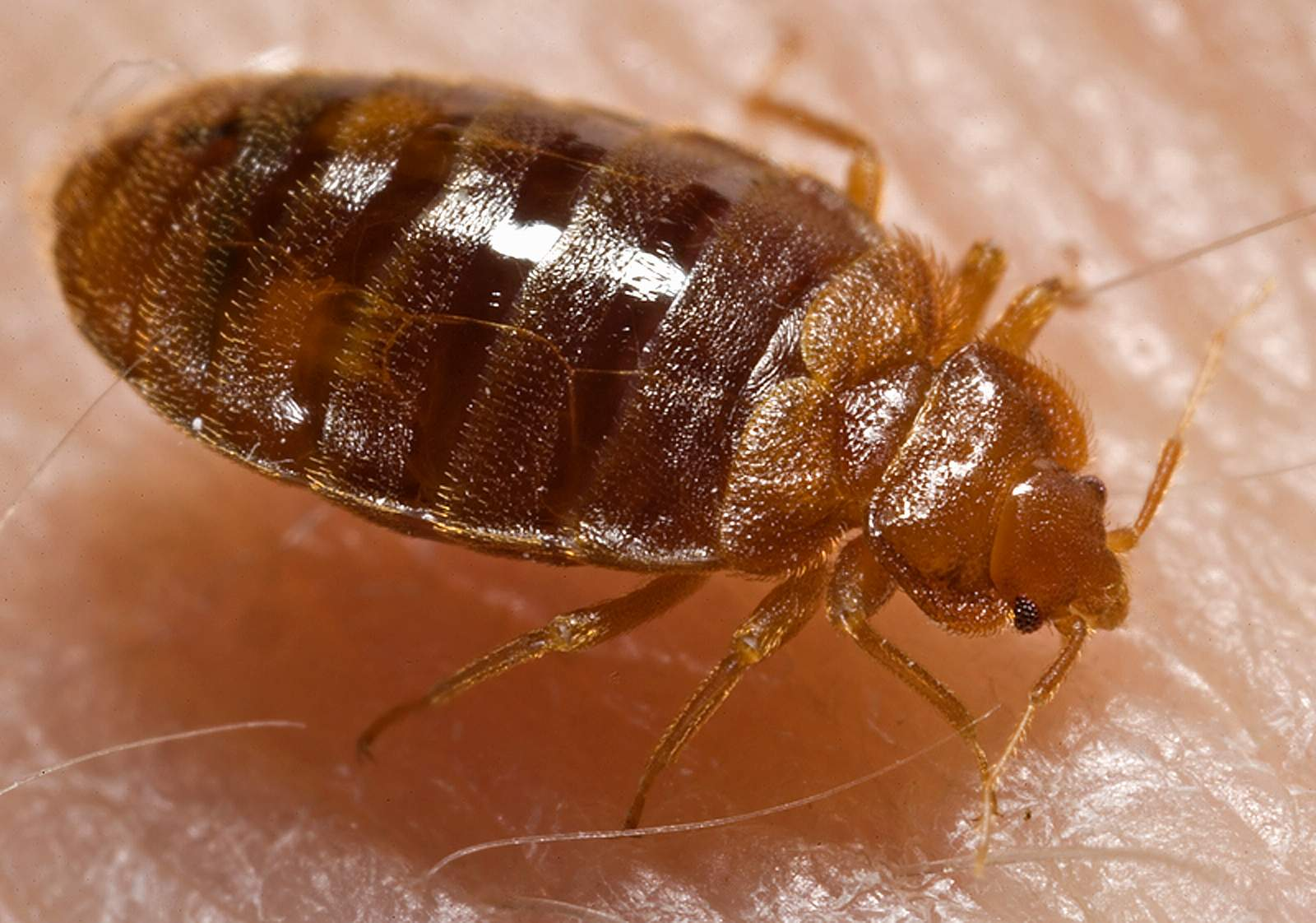 Disclosing bed bug infestation to potential tenants can save landlords money