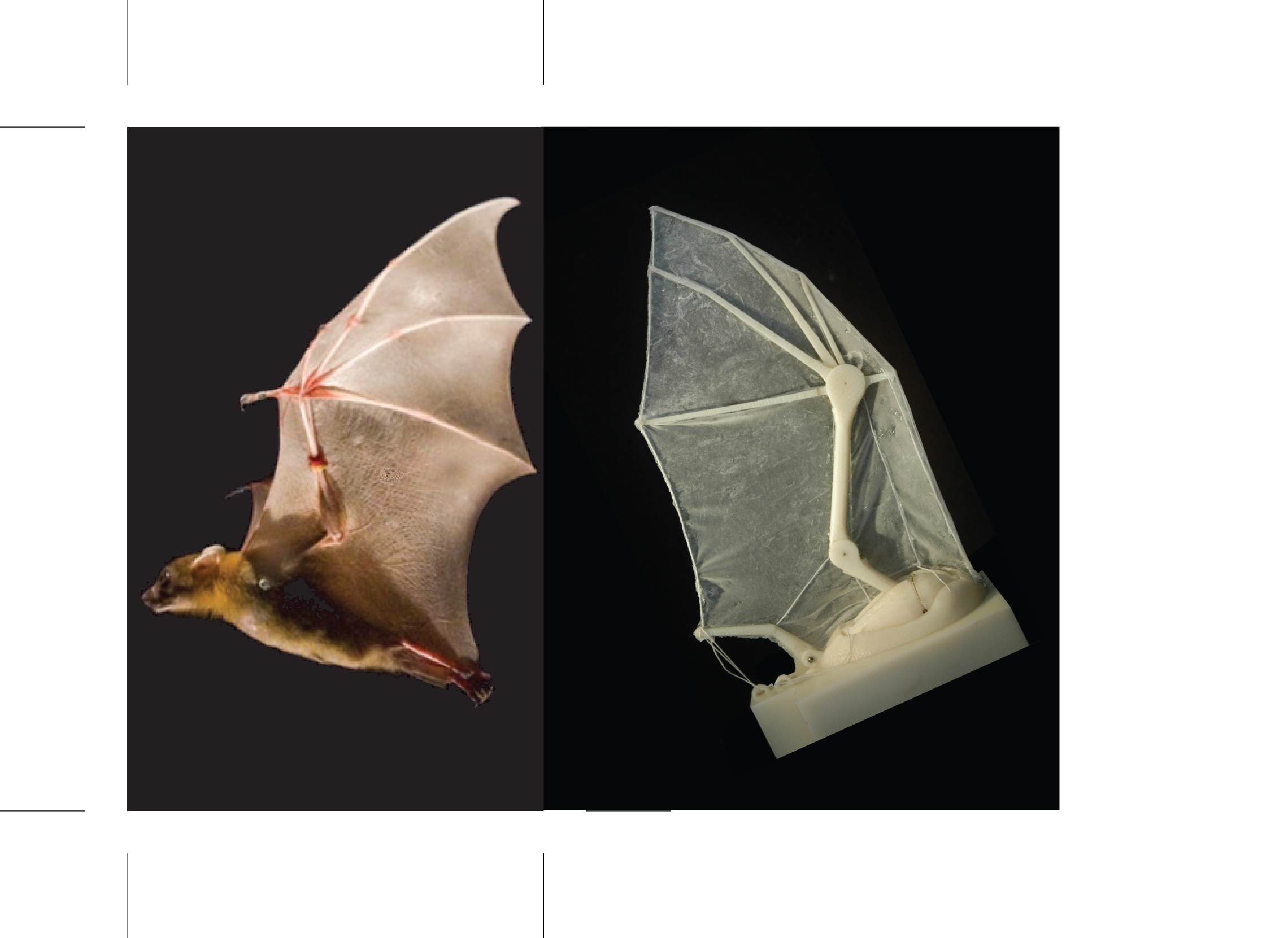 Researchers build robotic bat wing (w/ video)