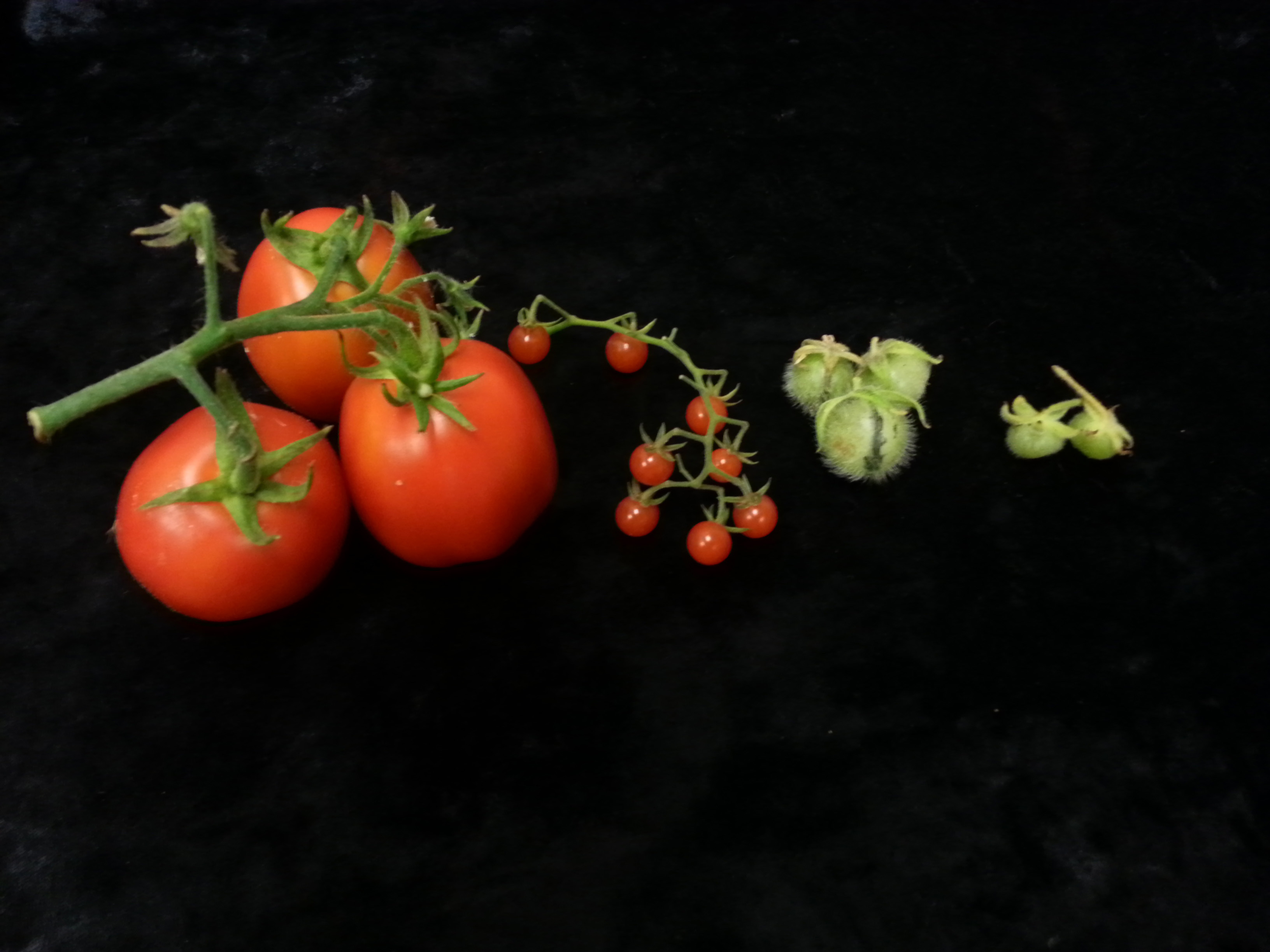 production of bioethanol from tomato solanum Nanotechnology in agri-food production: could be used for the production of biodiesel, bioethanol oxide nanoparticles on tomato (solanum.