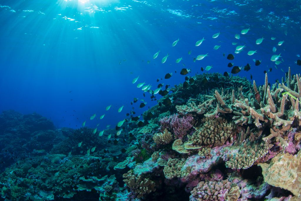 New Study Suggests Coral Reefs May Be Able To Adapt To