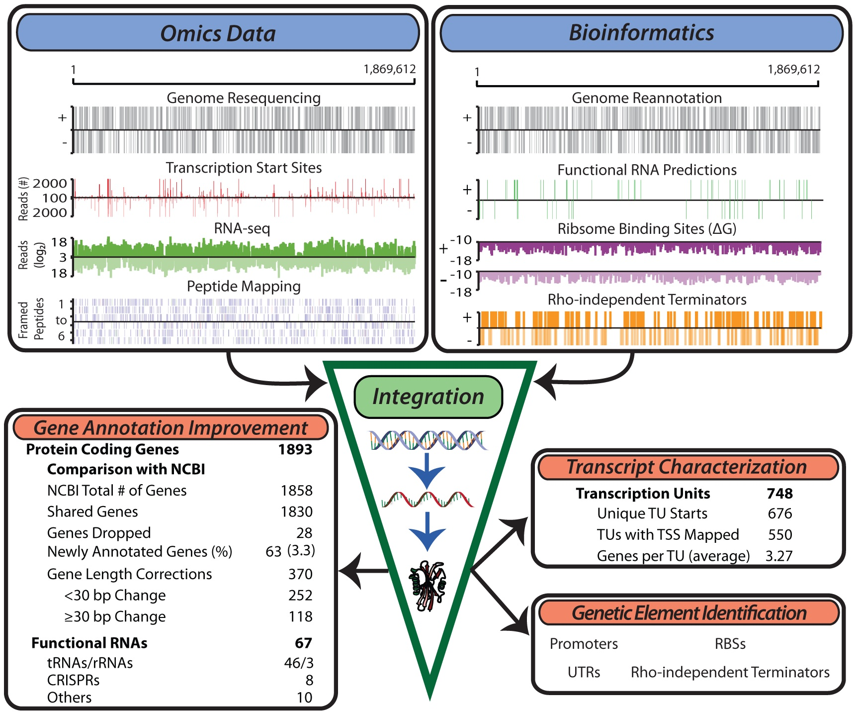 Genome Organization Of Organism Reflects Its 'hot' Lifestyle