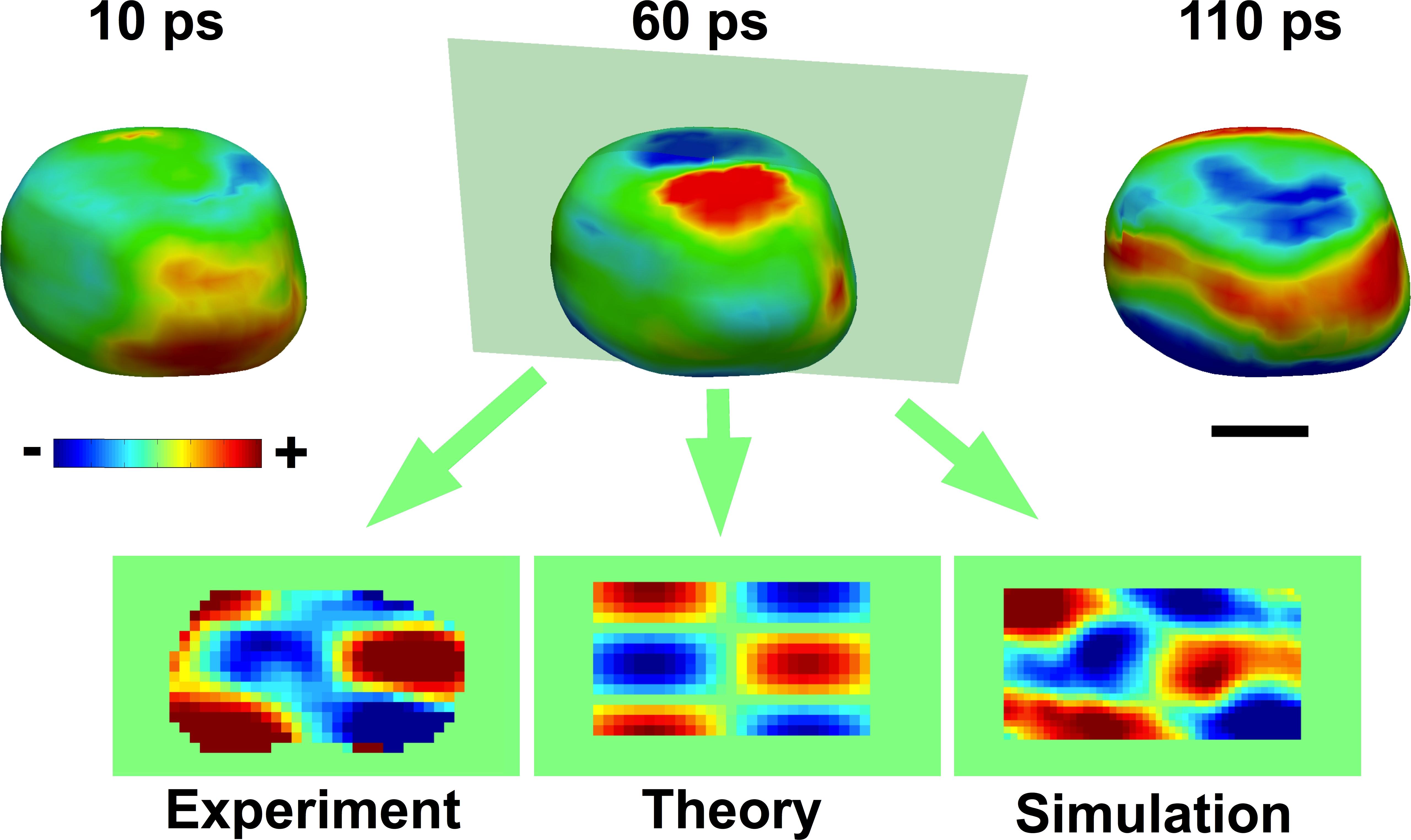 Gold nanocrystal vibration captured on billion-frames-per-second ...