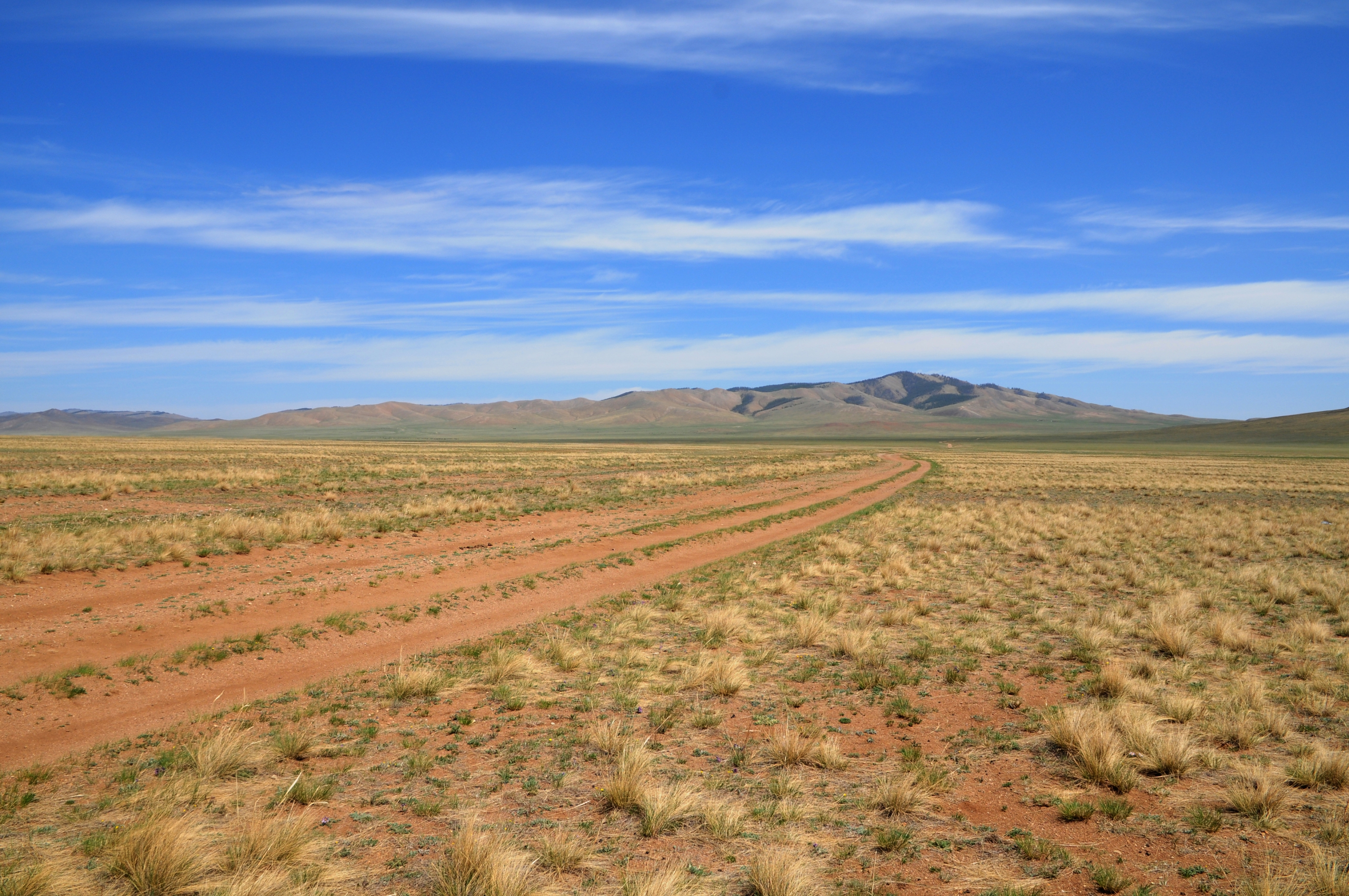 What plants grow in the steppe