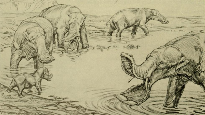 New Theory Suggests Platybelodon Had A Separate Trunk