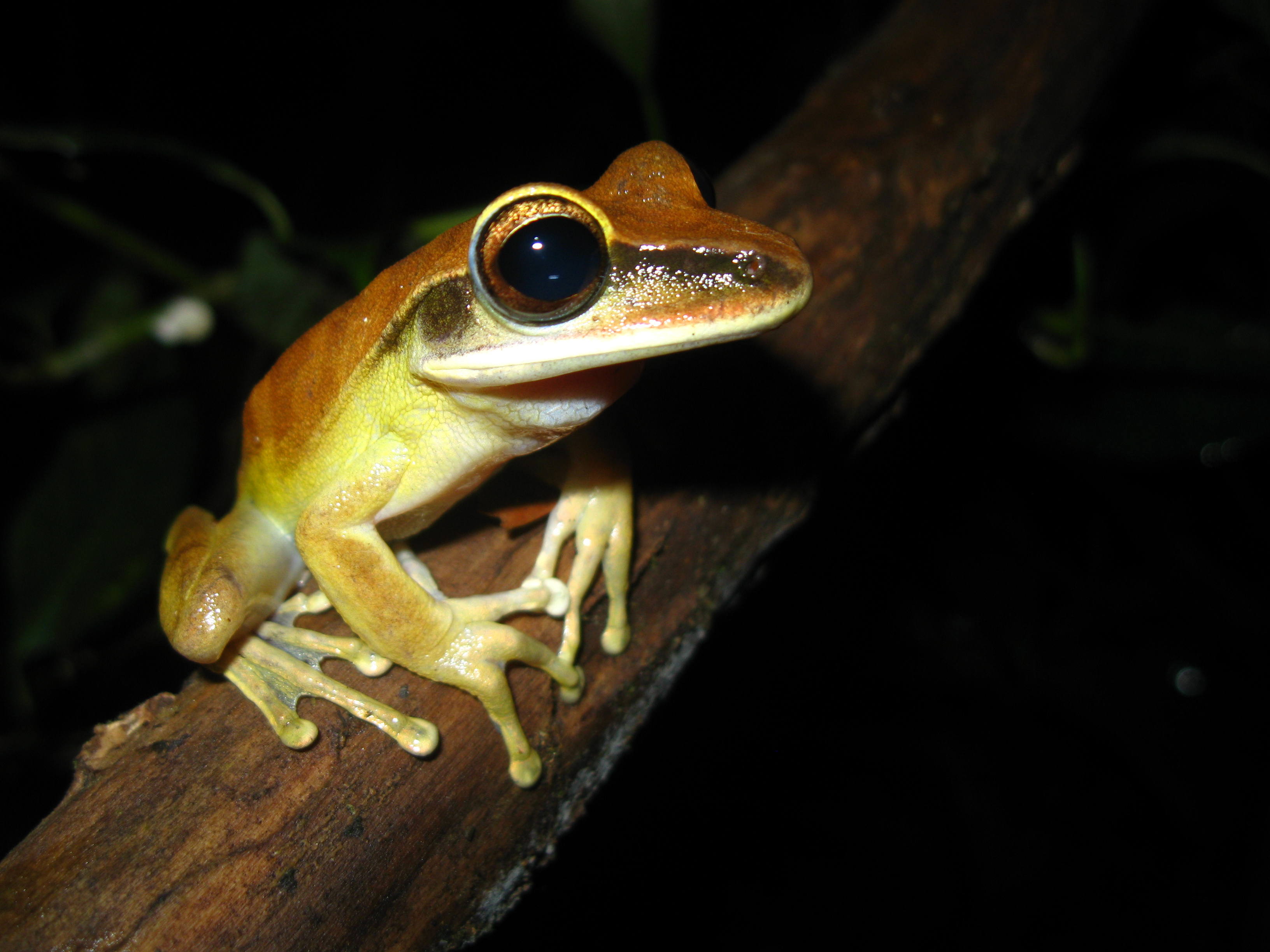 no matter the continent the world u0027s frogs have a lot in common