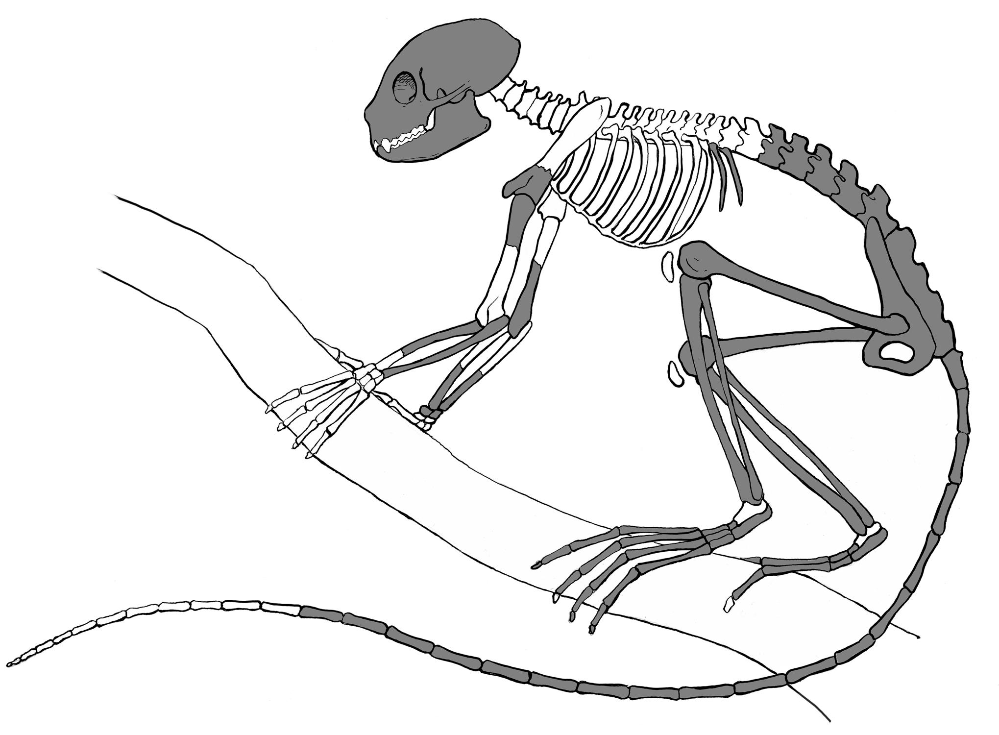 Oldest Primate Skeleton Discovered