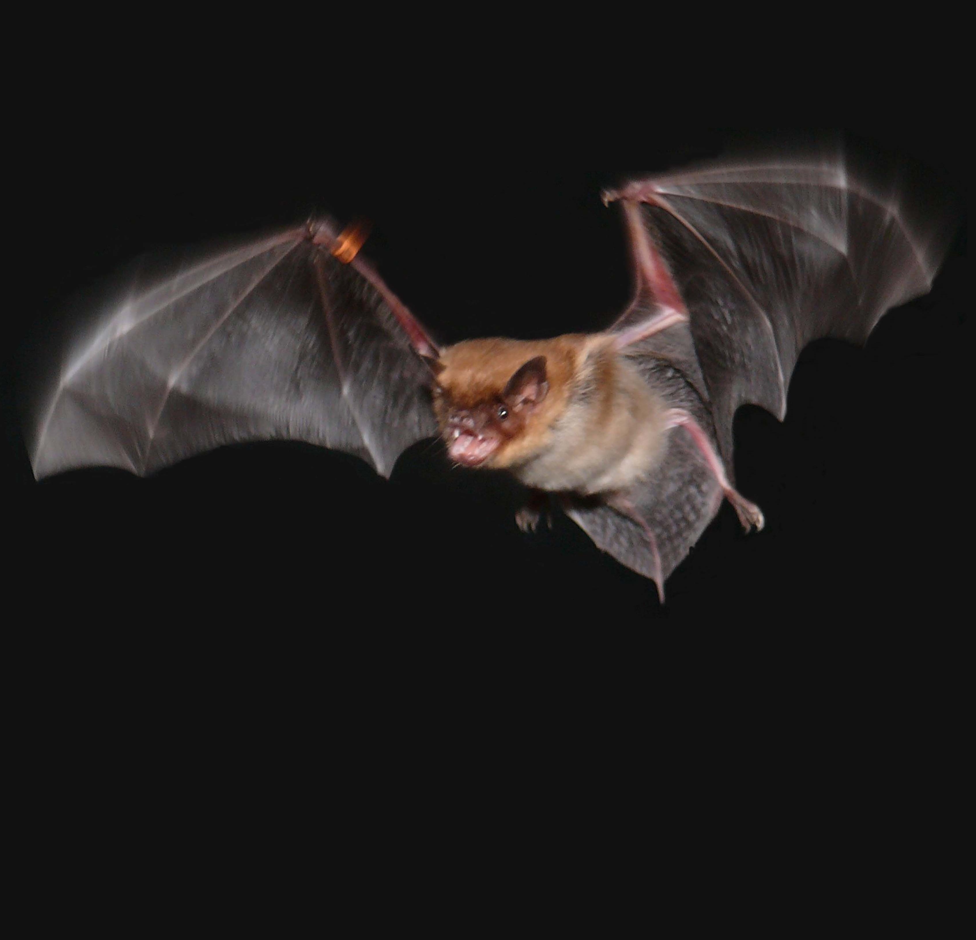 and bats' brains work differently on the move