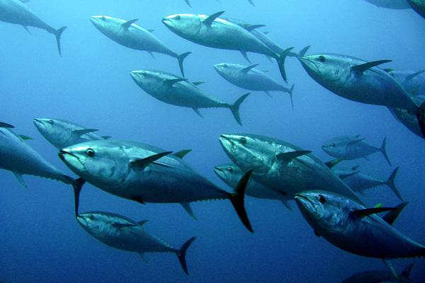 Fukushima fish still radioactive dating 10