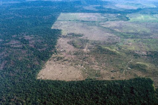 an argument against the brazilian governments destruction of the amazon forest Amazon destruction  annual forests loss in brazil and the brazilian amazon  where cattle ranching remains a major driver of amazon forest loss.