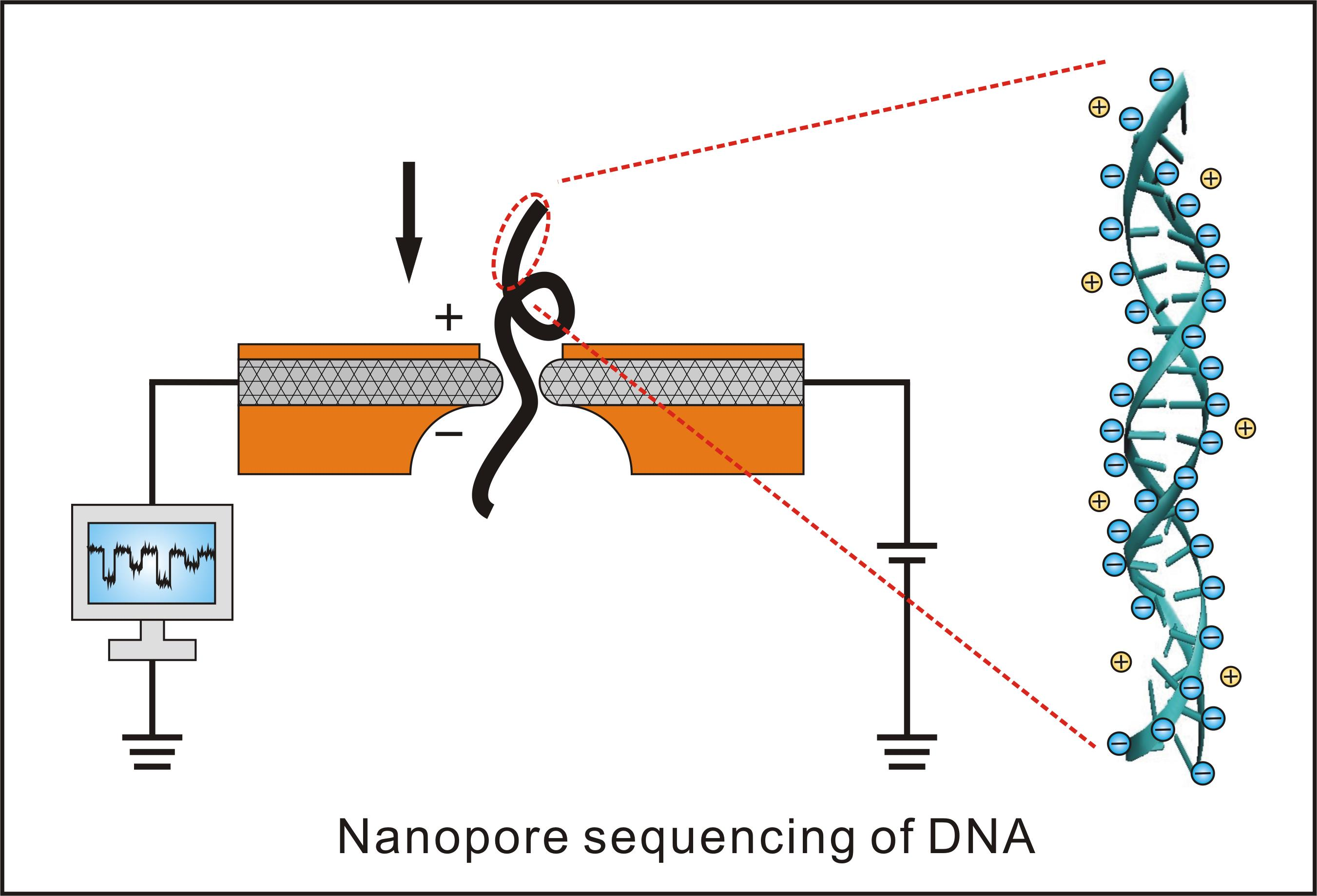 dna sequencing research paper Real-time dna sequencing in a paper published today in scientific reports , researchers at the royal botanic gardens, kew, detail for the first time the opportunities for plant sciences that are.