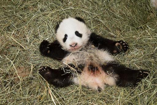 vienna zoo names baby panda happy leopard